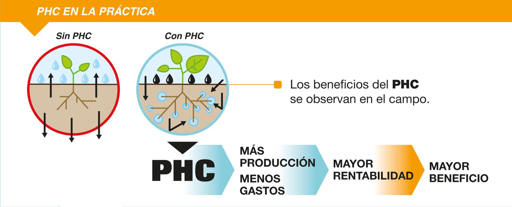 DipticPHC